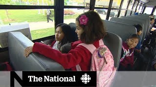 Download Seatbelts on school buses could have prevented injuries, deaths Video