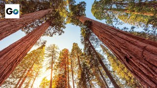 Download Sequoia & Kings Canyon National Parks Video