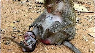 Download Break Heart When See Baby Hurt, Why Bad Mum Fight Baby Monkey Cry Very Loudly? Video