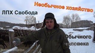 Download Ферма в глуши В гостях у Александра Деревенская жизнь Video