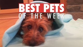Download Best Pets of the Week | June 2018 Week 2 Video