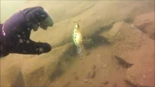 Download Treasure Hunting in Alpine Lake, California Video
