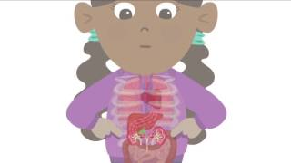 Download BBC Learning - Major Organs of the Human Body Video