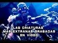 Download Criaturas Aterradoras Grabadas en Video #1 I Pasillo Infinito Video
