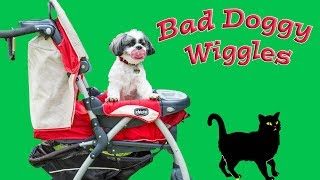 Download Wiggles Eats the Assistants Homework He is Such a Bad Doggy Video