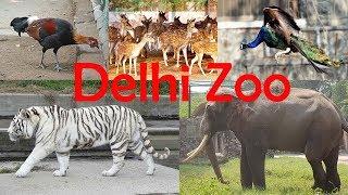 Download Delhi Zoo - All Animals Video