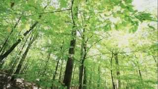 Download Woodland Habitat Restoration Project Video