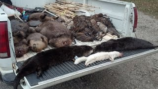 Download Amazing Otter Trapping Video Crossover sets with 220s!! Video