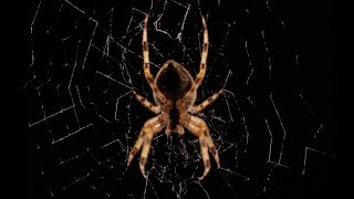 Download Beautiful Spider Web Build Time-lapse - BBC Earth Video