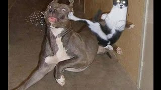 Download Ninja Cat Showings Kung Fu Skill | Funny Cats Compilation 20 min | Funny Cats Compilation 2015 New Video