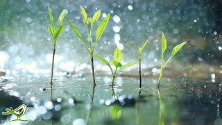 Download 11 Hours of Relaxing Music with Rain Sounds • Soft Piano Music, Sleep Music, Background Music Video