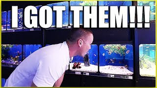 Download I waited 10 YEARS to buy these fish!!! Video