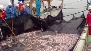 Download 定置網漁の様子 Fixed net fishery in Japan Video