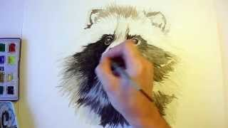 Download Akwarela Jenot - szybkie rysowanie. Watercolor Raccoon dog - speed up painting Video