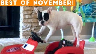 Download Ultimate Animal Reactions & Bloopers ofNovember 2018 | Funny Pet Videos Video