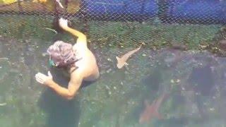 Download World's Happiest Shark has just been born! Video
