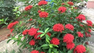 Download My garden overview (25-08-2019)/বাগান ওভারভিউ(With English Subtitle) Video