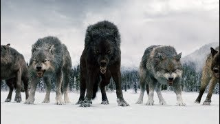 Download Twilight Wolves - Superhero Video