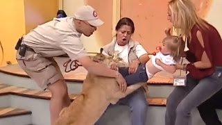 Download See Horrifying Moment A Lion Cub Tried To Snatch Screaming Toddler Live on TV Video