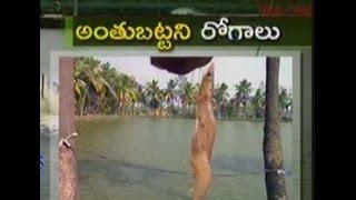 Download New virus attacked vannamei culture in East Godavari - జైకిసాన్ - on 2nd December 2015 Video