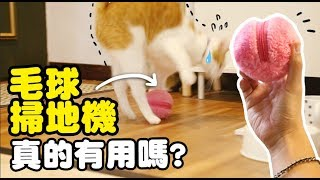 Download 【黃阿瑪的後宮生活】毛球掃地機真的有用嗎? Video