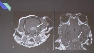 Download Canine Idiopathic Vestibular Disease Video