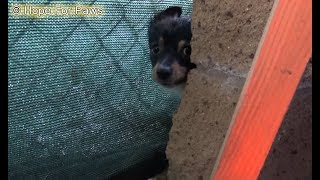 Download Children tried to save these puppies... they didn't realize their homeless mom was looking for food. Video