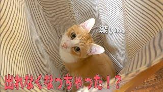 Download 洗濯カゴに入ってみたものの思ったより深くて出れない猫が可愛すぎたwww Video