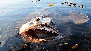 Download 10 MOST DANGEROUS OCEAN CREATURES IN THE WORLD Video