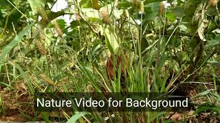 Download Green Nature video for Background HD Video