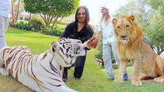 Download Visiting the Royal Family of Dubai !!! Video