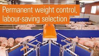 Download Big Dutchman: Automatic pig sorting scale TriSortpro Video