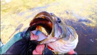 Download Top 11 Craziest Fishing Moments!! Video