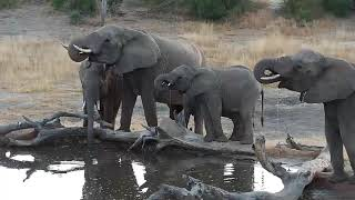 Download Djuma: Elephant herd of about thirty - 06:32 - 07/22/19 Video
