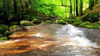 Download Relaxing Sounds of Water Stream 60mins (The Sounds of Nature) Video