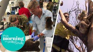 Download Dr Scott Saves Koalas on Kangaroo Island   This Morning Video