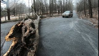 Download Cutting a tree out of the road Video