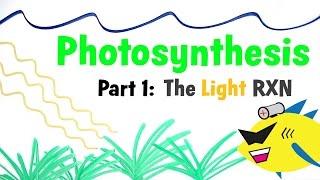 Download Aquarium Photosynthesis Pt 1: The Light Reaction Video