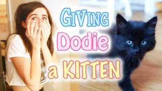 Download Giving Dodie a Kitten Video