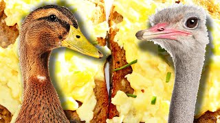 Download Which Egg Makes The Best Scrambled Eggs? Video