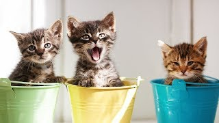 Download Cute Kittens - Try Not to Say Aww Challlenge 2016 Video