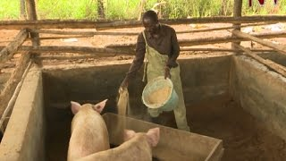 Download Local entrepreneurs contribute to changing lives in northern Uganda Video