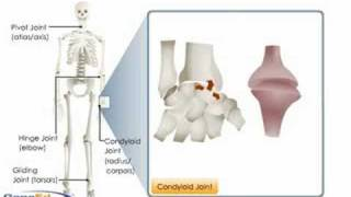 Download Types of Synovial Joints Video