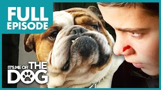 Download The Bully Bulldog: Pugsley | Full Episode | It's Me or The Dog Video