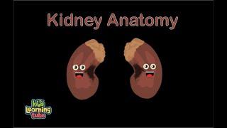Download Kidney Anatomy Song for Kids/Kidney Anatomy for Children/Kidney Anatomy Video