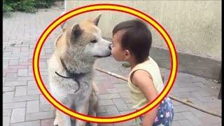 Download 【海外の反応】「愛さずにはいられない」 秋田犬を見た外国人から大反響の嵐『今まで飼っていた犬の中で最高にワンダフルで、一番の友人だよ』【すごい日本】【再UP】 Video