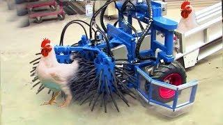 Download Çiftlik'ten Sofraya! Tam Otomatik Akıllı Makinalarla Şaşırtıcı Tavuk Yakalama Toplama Ve Sonrası.. Video