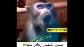 Download 9erd mnefkh hhhhhh Video