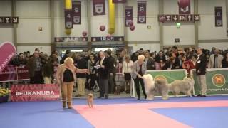 Download 81.ª Exposição Canina Internacional do Norte Video