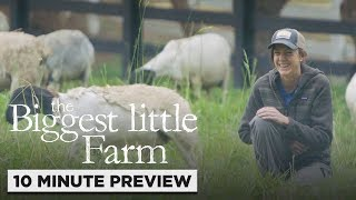 Download The Biggest Little Farm   10 Minute Preview   Own it now on Blu-ray, DVD & Digital Video